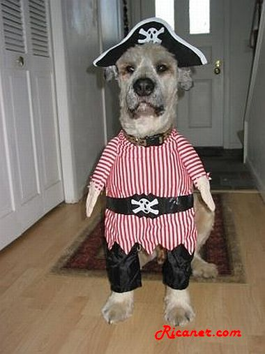 Costumes d'Halloween pour animaux