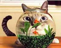Poisson avril pour chat small